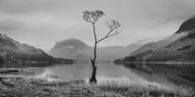 11th Jan 2018 - 'The' Buttermere Tree