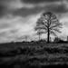 Paimpont 2018:  Day 11 - Lensbaby Tree