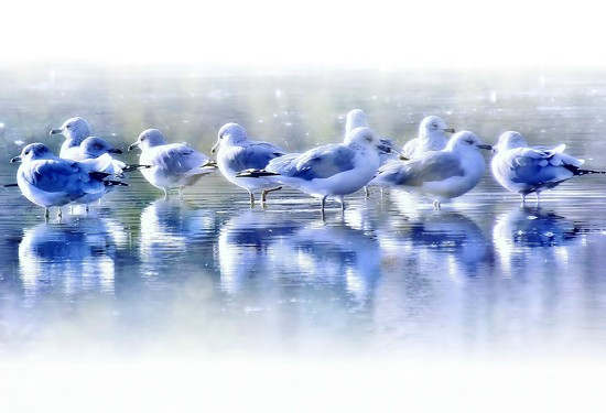 Gulls by lynnz