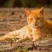 Feral Kitty, Taking a Break!