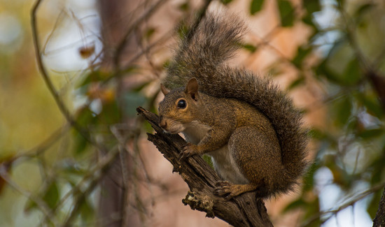 Noisy Squirrel! by rickster549