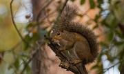 11th Jan 2018 - Noisy Squirrel!