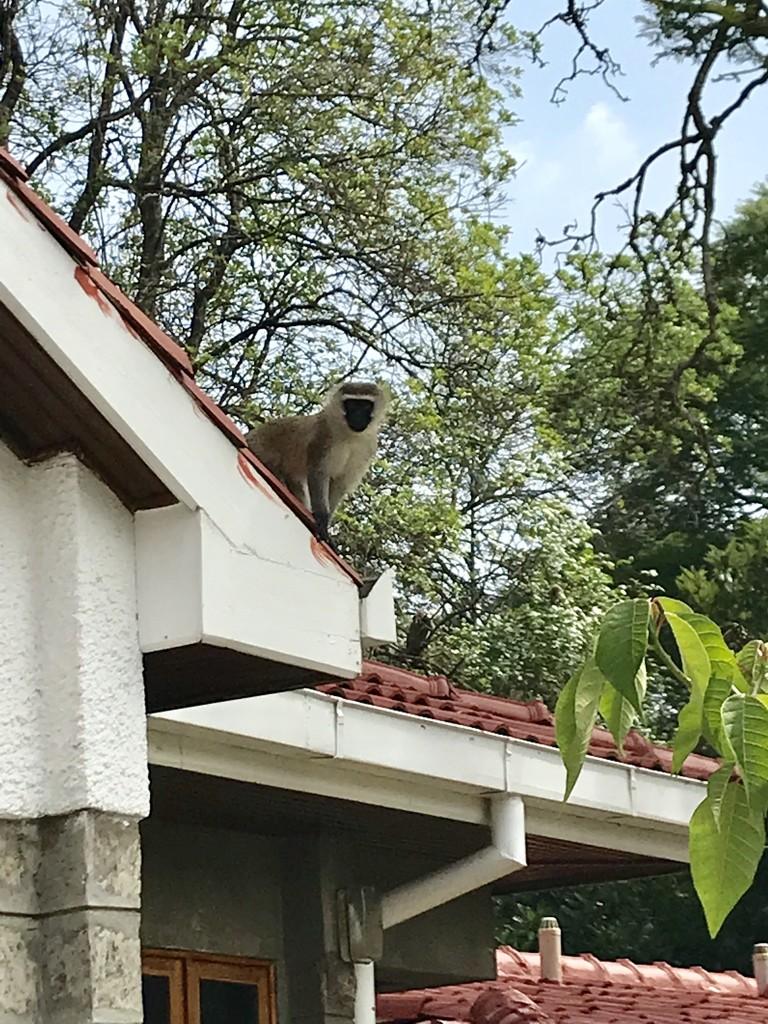 Rooftop Visitor by kareenking