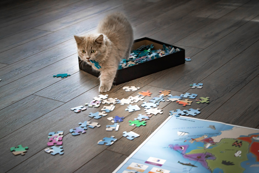 When Cats Build Puzzles  by bokehdot