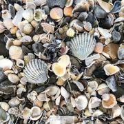 11th Jan 2018 - Frosty Shells