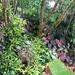 Our Garden - 2