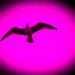 Seagull Supernova