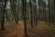 13th Jan 2018 - Path In the Woods