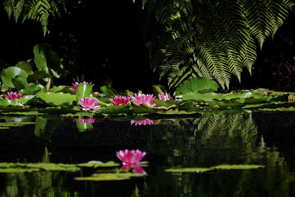 My pond by dkbarnett