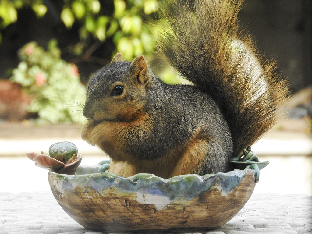 Squirrel on the Half Shell by Weezilou