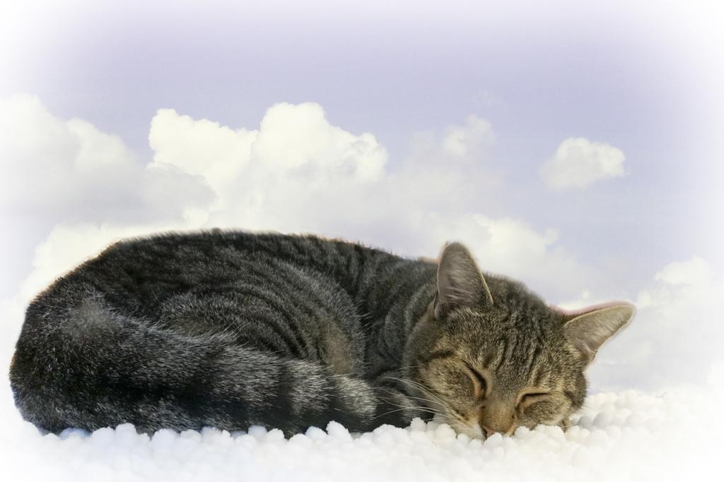 Sleeping the Sleep of the Innocent by Weezilou