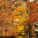 Fall Colors!