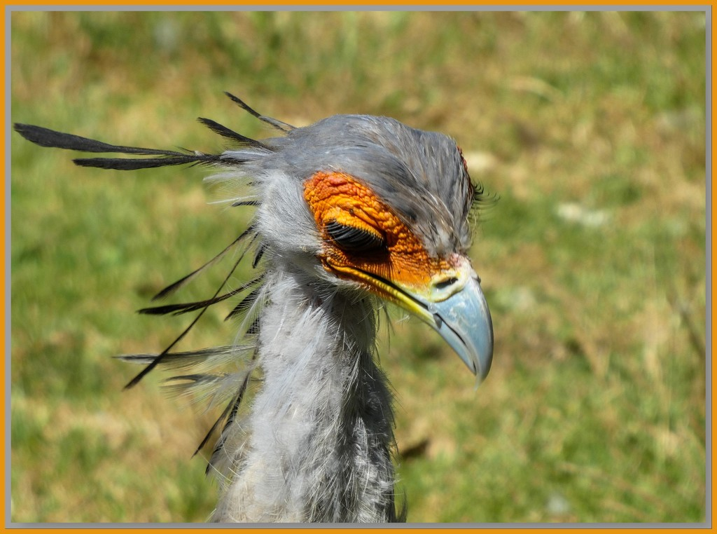 Secretary bird ........ by ludwigsdiana