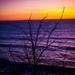 Tree On The Beach At Sunset