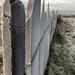 Frosty slate fence
