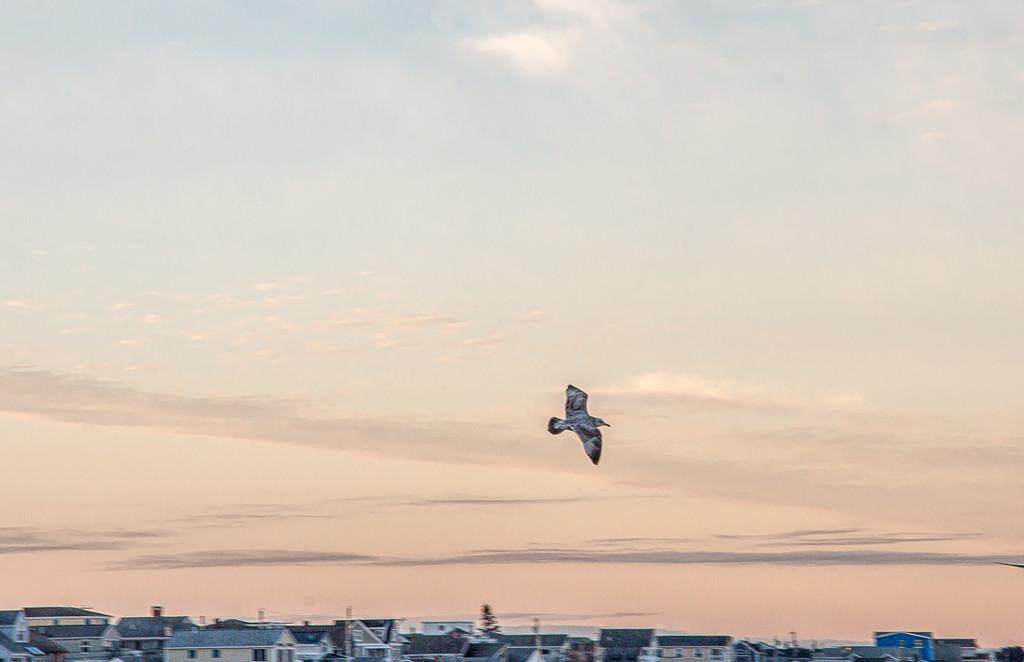 In flight by joansmor