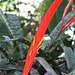 Our Garden 5 - Red Sword