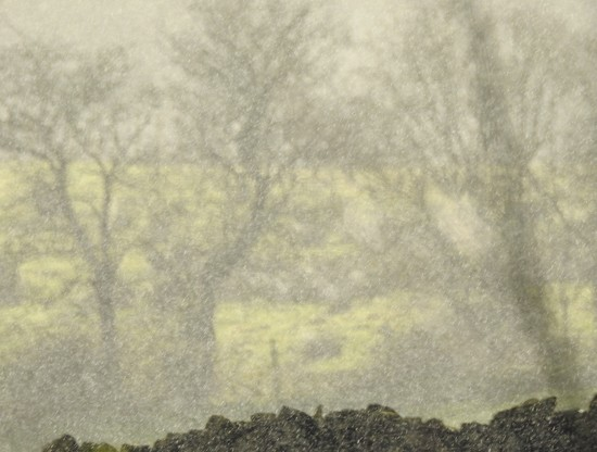 Trees through rain by roachling
