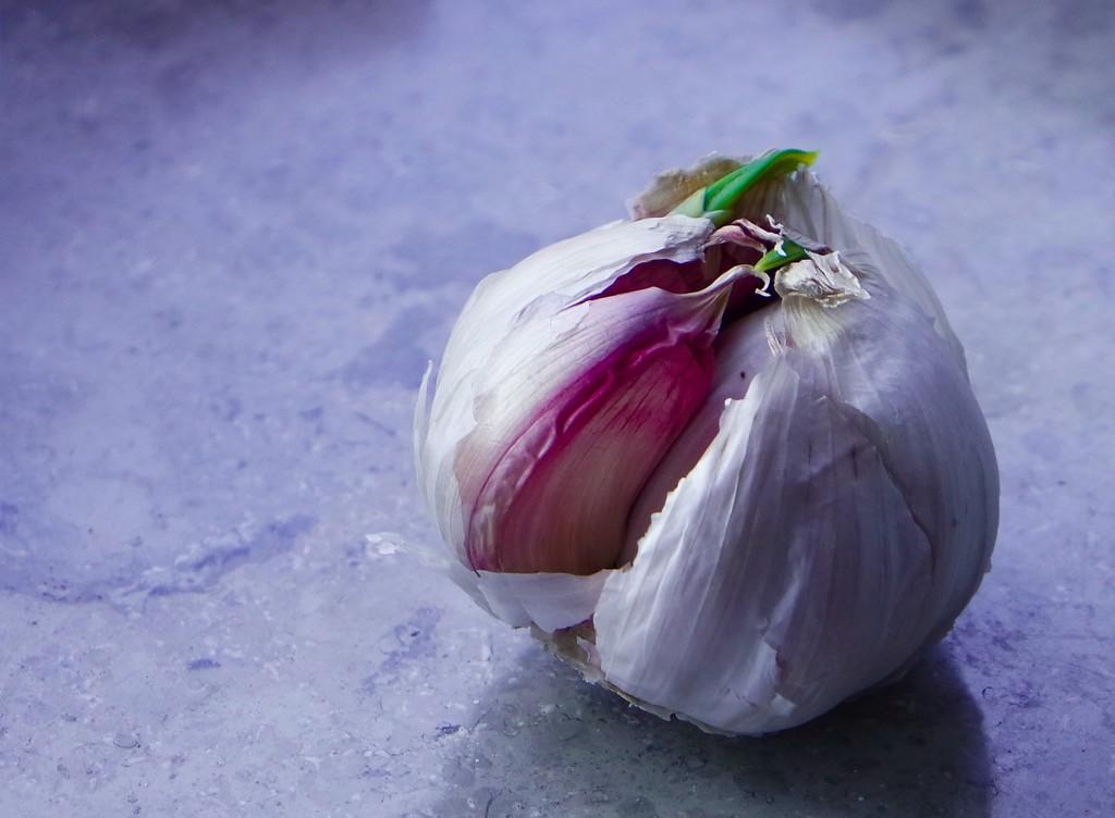 Garlic by toinette