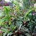 Our Garden 9 - Not More Bromeliads