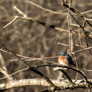 15th Jan 2018 - G'Morning, Bluebird