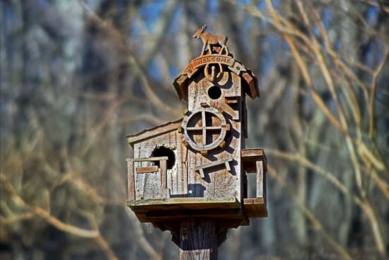 Neighbor's Birdhouse by dsp2