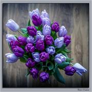 16th Jan 2018 - Purple Tulips