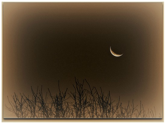 Winter Moon by peggysirk