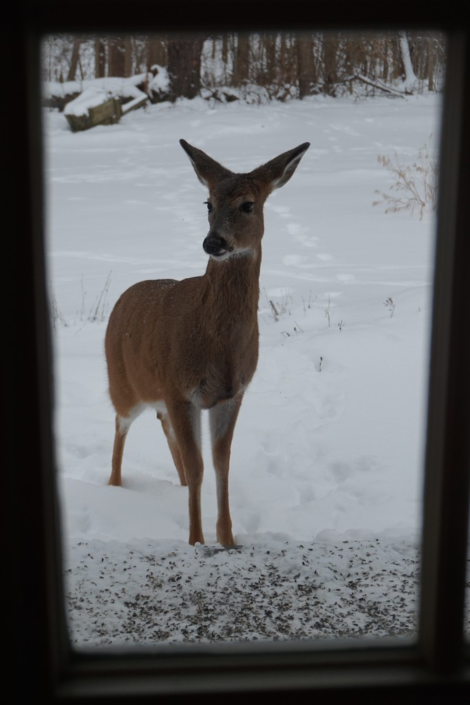 Another back porch visitor by tunia
