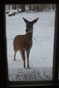 16th Jan 2018 - Another back porch visitor