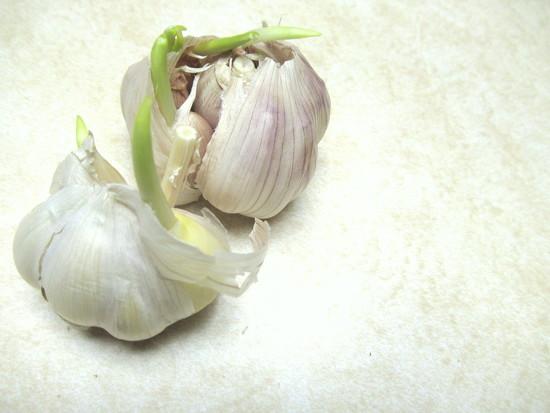Garlic by bruni
