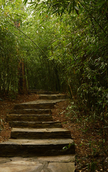 Path through the bamboo by blueace