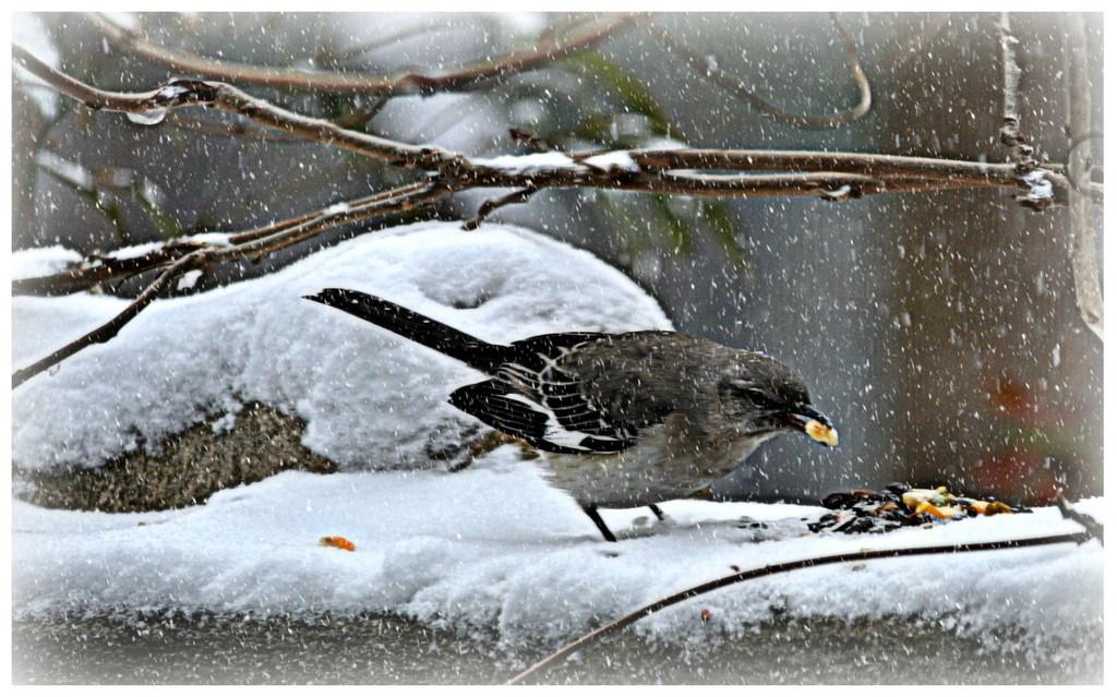 Snow Snacks by peggysirk