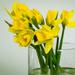 Daffodils take 3