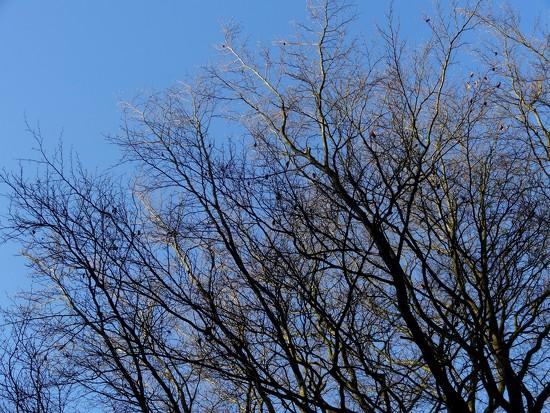 sun in the beech tree by gijsje