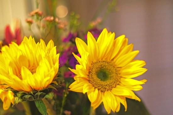 Birthday Flowers by dmdfday