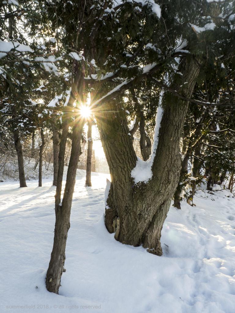 icy sunburst by summerfield