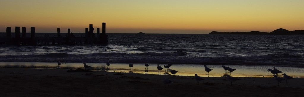 Seagulls At Sunset_DSC1682 by merrelyn