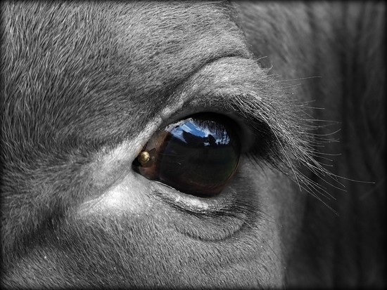 Eye spy......... by janemartin