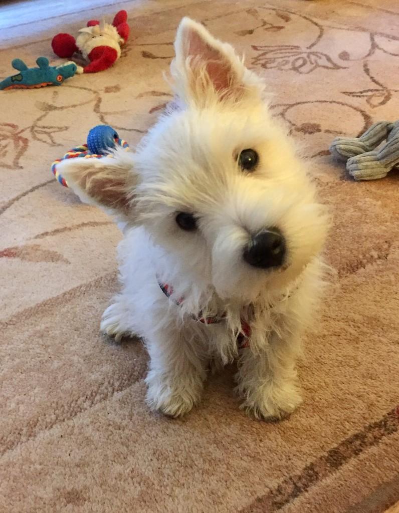 Look mum both ears up! by pamknowler