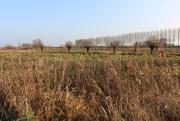 18th Jan 2018 - Nature area `` Zwaakse Weel``