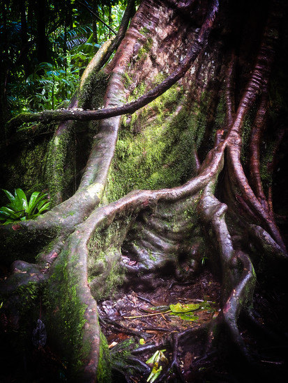 18-01 tree by tstb13