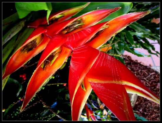 In the Gardens of the Ginger Factory Yandina by 777margo