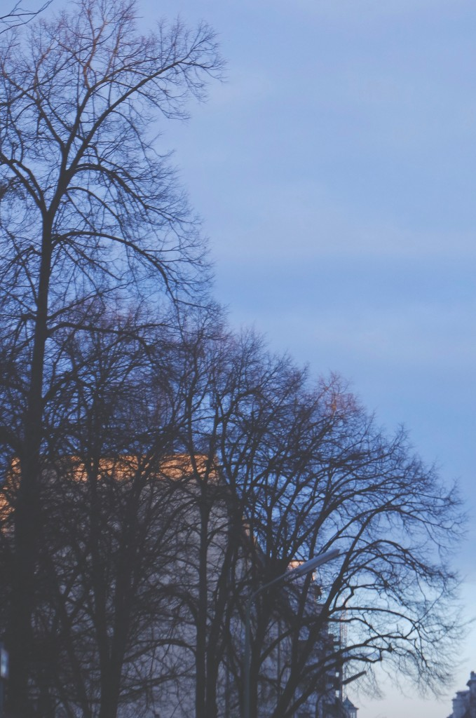 Trees & sky by toinette