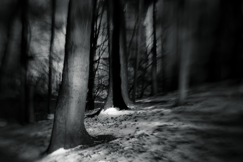 old man forest by northy