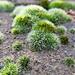 Moss Mounds.