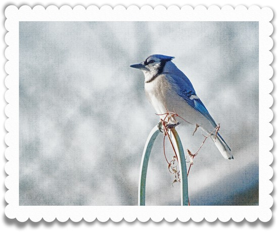 Photoshop postage stamp by novab