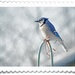 Photoshop postage stamp