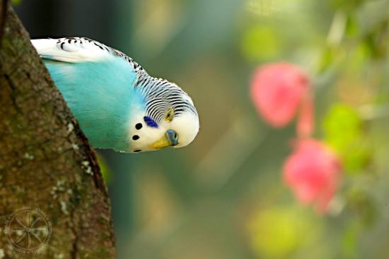 Pretty Bird by gq