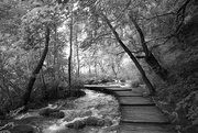 22nd Dec 2020 - 83 Plitvice in Black and White